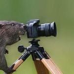 CHUCKLE-Camera Beaver